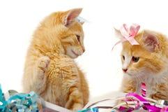 Twee zoete kattenkatjes Stock Foto