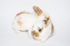 Twee zoete konijntjes Stock Foto's