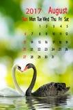 Twee zwanen op een meer, Kalender voor Augustus 2016 Royalty-vrije Stock Afbeeldingen