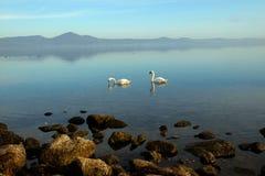Twee zwanen op het meer Royalty-vrije Stock Afbeelding