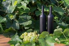 Twee zwarte flessen van wijntribunes op de achtergrond van groene bladeren van druiven en naast het ligt een bos van druiven royalty-vrije stock foto's