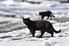 Twee zwarte katten lopen in de straat op een de winterdag Stock Foto's