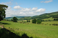 The Tweed valley near Traquair in Peebleshire. Tweed valley near Traquair in Scottish Borders Stock Photography