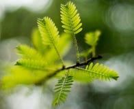 Tweeg植物 免版税库存图片