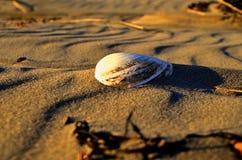 Tweekleppig schelpdiershell op het strand Royalty-vrije Stock Foto