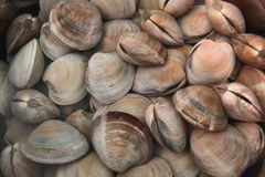 Tweekleppige schelpdieren Stock Fotografie