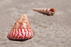 Tweekleppige schelpdieren op Zand Stock Fotografie