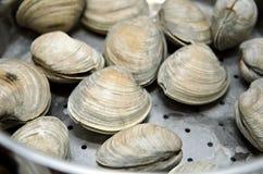 Tweekleppige schelpdieren in stoomboot worden gekookt die Royalty-vrije Stock Foto