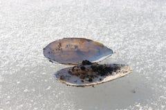 Tweekleppigenshell de toppositie ligt op het ijs van een bevroren meer royalty-vrije stock foto