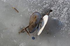 Tweekleppigenshell de toppositie ligt op het ijs van een bevroren meer royalty-vrije stock fotografie