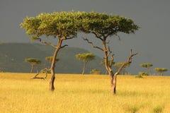 Tweeling bomen Royalty-vrije Stock Foto's