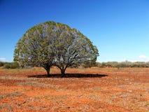 Tweeling Bomen op Steenachtige Vlakte Stock Fotografie