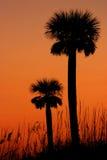 Tweeling palmen royalty-vrije stock afbeeldingen