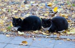 Tweeling zwarte katten die in het park zitten Stock Fotografie