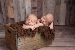 Tweelingbabyjongens die in een Houten Krat slapen Stock Afbeelding