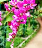 Tweelingen in bloem Beeld uit lalbag wordt genomen die banglore royalty-vrije stock foto