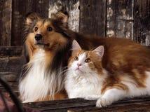 Tweelingen in kleur Stock Foto