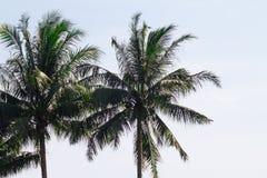 Tweelingpalmen die in de luchtige zoute golfwind slingeren op eenzaam royalty-vrije stock foto's