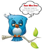 Tweeter Blue Bird Hangover Royalty Free Stock Photo