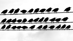 tweeters Stockbild