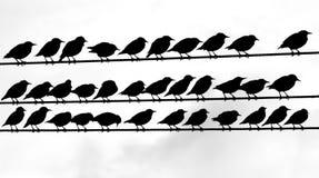 Tweeters Stock Image