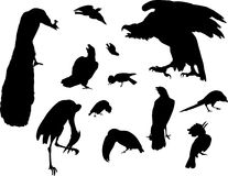 Twelve bird silhouettes Stock Photo
