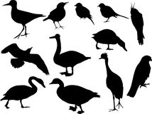 Twelve bird silhouettes Royalty Free Stock Images