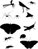 Twelve black insects Royalty Free Stock Photo