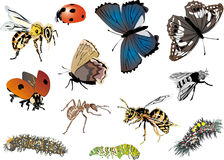 Twelve color insects collection Stock Photo