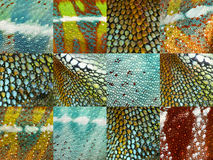 Twelve colorful reptile skins Stock Image