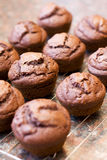 Twelve freshly baked chocolate muffins Stock Images