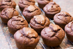 Twelve freshly baked chocolate muffins Stock Photo