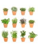 Twelve Herbs In Pots Stock Photography