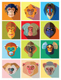 Twelve icons of monkeys of different breed in flat design Stock Photos