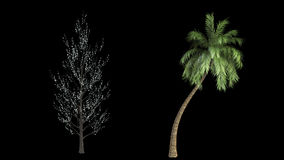 Twelve loop high rendered isolated trees. With realistic wind movement a collection every motion designer and architecture designer must have. Each tree is loop stock video footage