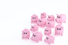 Twelve pink pigs Stock Image