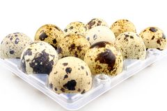 Twelve quail eggs in egg carton Stock Photo