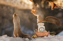 Is it twelve yet. Red squirrel standing on a clock with a wheelbarrow while another holding a snowball stock images