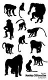 Twelve Vector Monkey silhouettes collection. 12 Vector Monkey silhouettes collection Stock Images