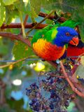 Twenty Eight Parrot Stock Images