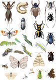 Twenty five color insects collection Stock Photo