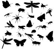 Twenty four insect silhouettes Stock Photography