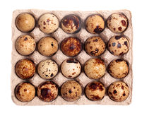 Twenty quail eggs in the package. Isolated on white background Stock Images