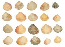 Twenty shells. Set of twenty shells isolated Royalty Free Stock Photos
