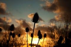 Twezel Startwert für Zufallsgeneratorkopf im Sonnenuntergang Stockfotos