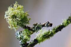 Twig Stock Images