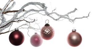 Twig with baubles. Twig with pink baubles on white background royalty free stock image