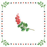 Twig of bilberry on white background in berry frame. Berries and leaves on a white background. Blueberries, raspberries, blackberries and green branches Stock Image