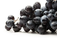 Twig of black grape Stock Images