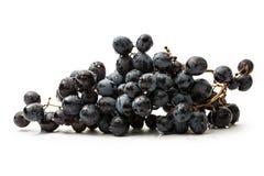 Twig of black grape Royalty Free Stock Photos